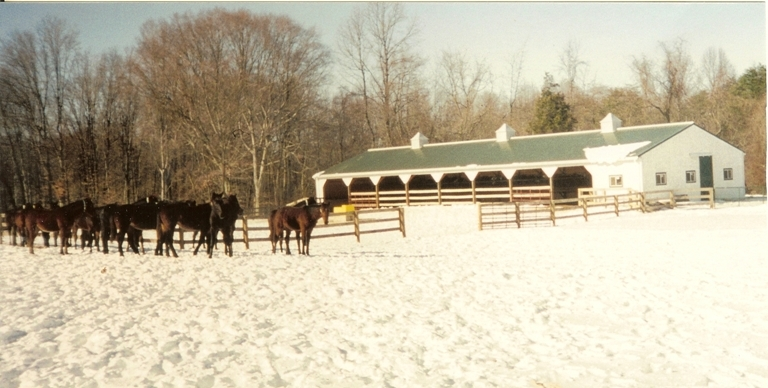 36' x 110' Horse Run In Shed with Three Horse Stalls, Chesapeake City, MD